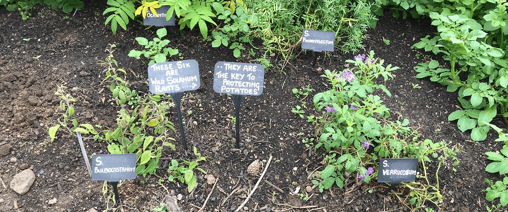 Labels on potatoes at Royal Botanic Garden, Edinburgh