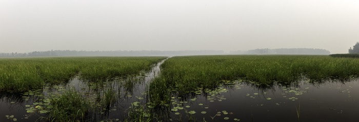 A view of a lake in Minnesota fringed by wild rice